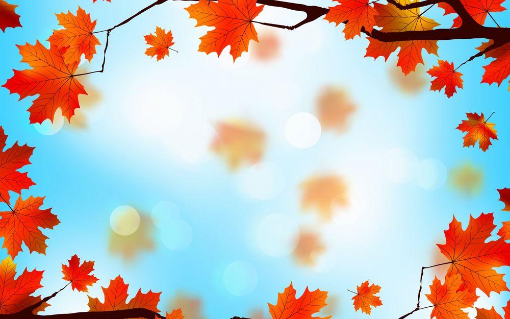 обои на рабочий стол кленовые листья осенью 14830