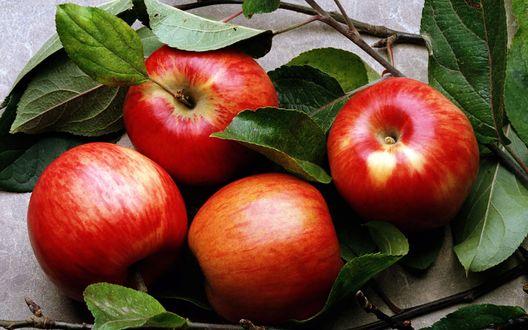 Обои Четыре красных яблока, и веточки, на которых они еще недавно росли