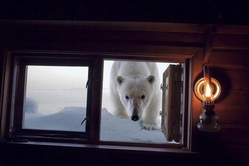 Обои Белый медведь заглядывает в раскрытое окно домика, у окна на стене горит светильник