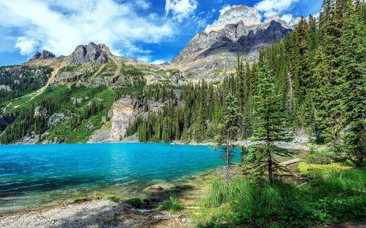 Обои Голубая река у подножия гор, рядом с сосновым лесом, Yoho National Park / Национальный парк Йохо, Канада / Canada