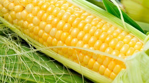Обои Кукурузный початок, листья, крупный план