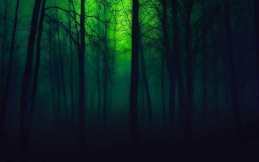 Обои Таинственный волшебный лес, фотограф Nedim