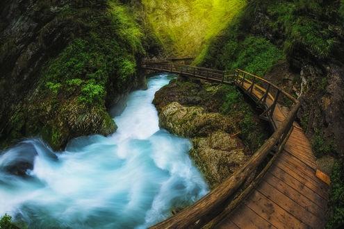 Обои Long Vintgar gorge in Slovenia / ущелье Винтгар в Словении, by roblfc1892