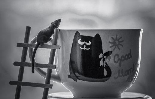 Обои Мышонок на лестнице у чашки, где нарисован кот, (Good morning / доброе утро), фотограф Lyudmila Prokopenko
