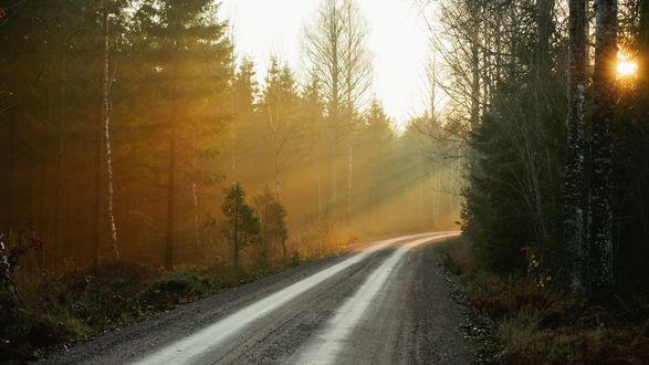 Обои Дорога, ведущая сквозь туманный лес на закате