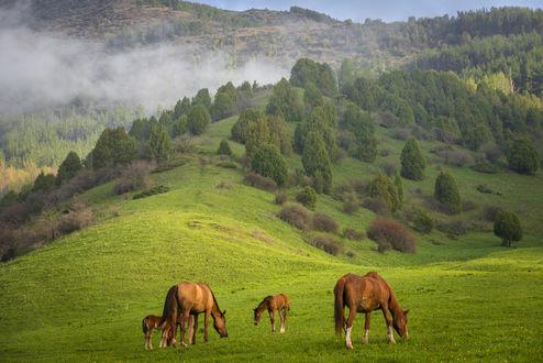 Обои Лошади пасутся на лугу, фотограф Григорий Беденко