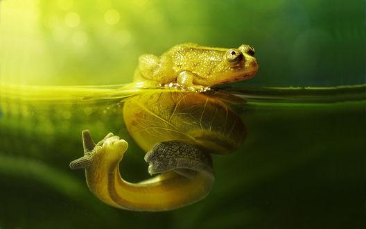 Обои Маленькая лягушка плывет на большой улитке в зеленой воде на зеленом фоне