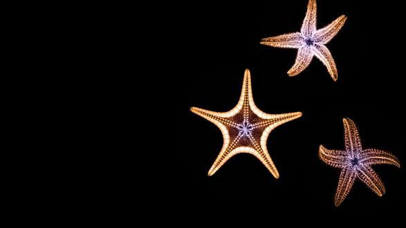 Обои Три морских звезды, на темном фоне