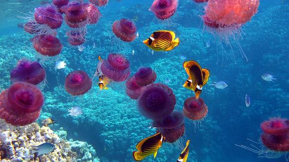Обои Подводный мир океана
