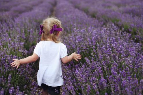 Обои Девочка на лавандовом поле, фотограф Anastasia Shelest