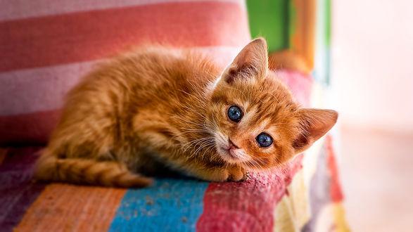 Обои Голубоглазый рыжий котенок на разноцветном пледе