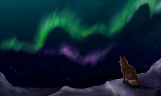 Обои Волк смотрит на северное сияние, by lauraacan