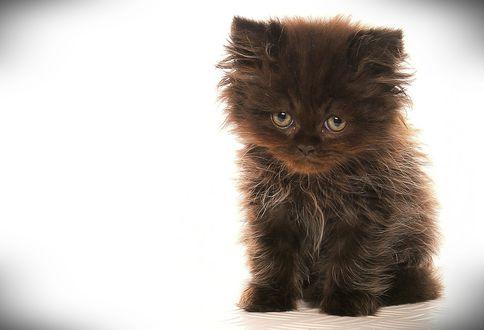 Обои Мохнатый коричневый котенок сидит и смотрит на нас грустным взглядом