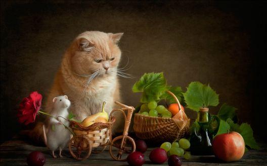 Обои Коту исполнилось 8 лет, Феликс пришел поздравить Кота и принес много вкусных подарков, фотограф Елена Григорьева / Eleonora Grigorjeva