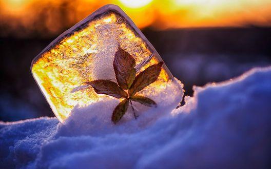 Обои Листок примерз к кубику льда