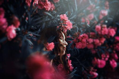 Обои Девушка стоит среди цветущего дерева, фотограф Ronny Garcia