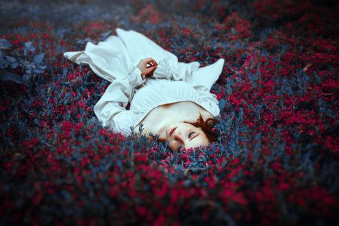 Обои Девушка лежит на поляне цветов, фотограф Ronny Garcia