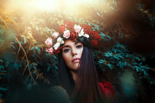 Обои Девушка в венке из роз, фотограф Ronny Garcia