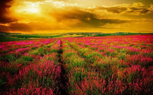 Обои Цветочное поле, освещенное заходящим солнцем