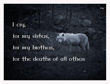 Обои Волк в смертной тоске (Y cry, for my sisters, for my brothers, for the deaths of all others / Я плакал о моей сестре, моего брата, о всех других)