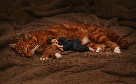 Обои Девушка лежит у ног рыжего кота