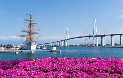 Обои Парусник, ошвартованный у пристани, цветы на другом берегу, мост на заднем плане
