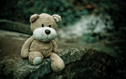 Обои Игрушечный медведь сидит на камне