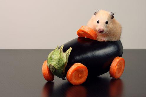 Обои Рыжий хомяк сидит за рулем баклажана с морковочными колесами