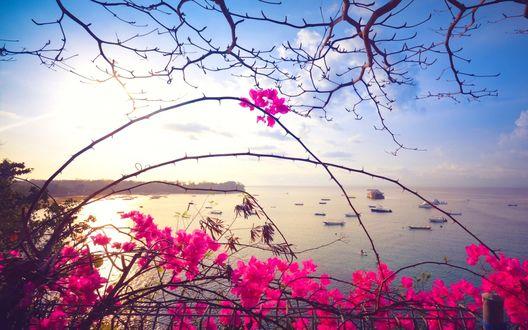 Обои Розовые цветы на фоне прибрежной полосы океана, на воде которого видны лодки