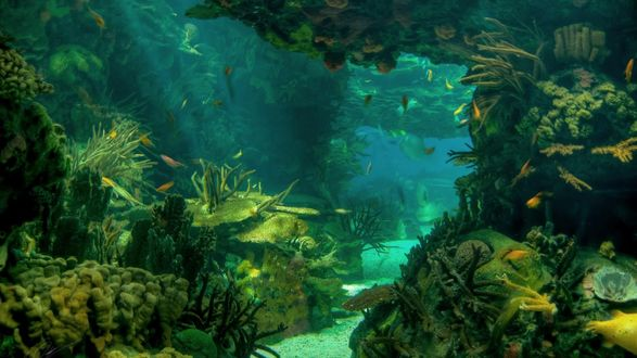 Обои На морском дне видны стайки рыб, плавающих среди кораллов, заросших водорослями