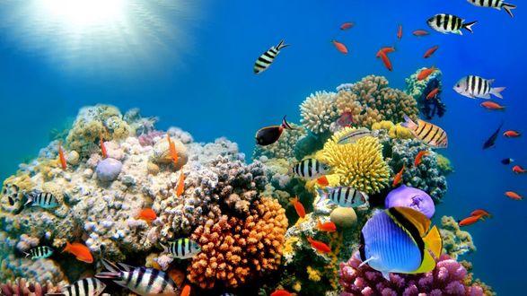 Обои Рыбки яркой раскраски плавают над коралловым рифом