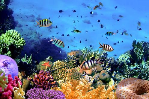 Обои Полосатые рыбы в ярком подводном мире, среди кораллов и других морских обитателей