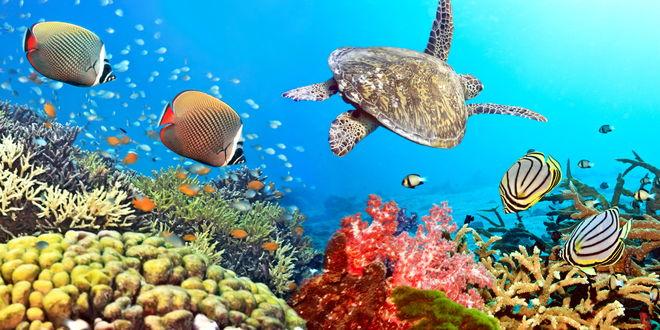 Обои Экзотические рыбы, плавающие следи кораллов, и морская черепаха