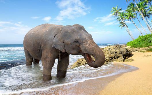 Обои Слон купается в море, рядом с камнями и пальмами