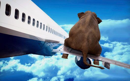 Обои Слон отправился в полет на крыле самолета