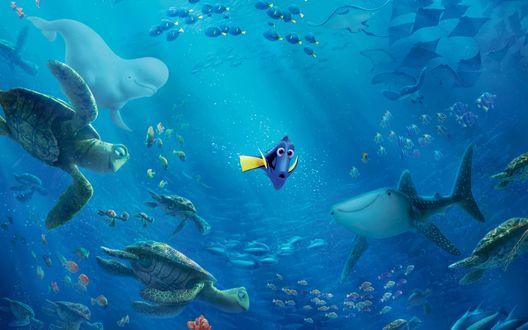 Обои Главная героиня мультфильма В поисках Дори / Finding Dory в подводном царстве