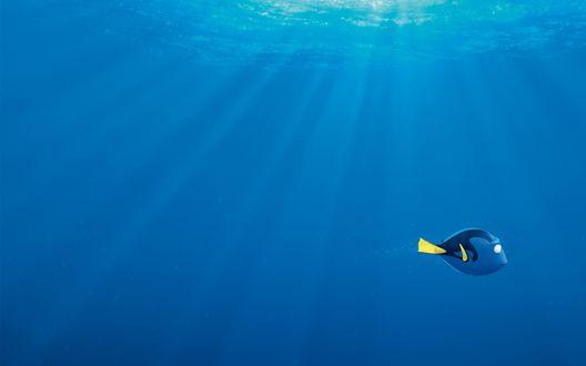 Обои Главная героиня мультфильма В поисках Дори / Finding Dory плывет под водой