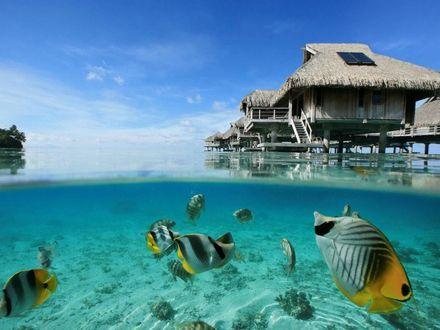 Обои Подводный мир, бунгало и яркие рыбы, плавающие в прозрачной воде