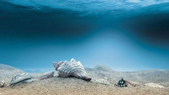 Обои Красивые раковины лежат на морском дне