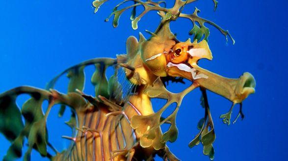 Обои Морской конек маскируется под растение