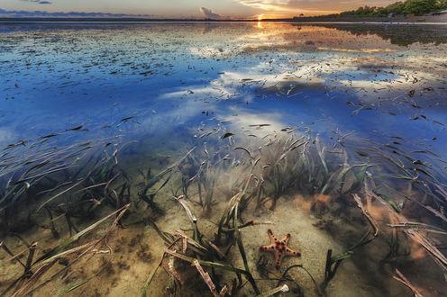 Обои Морская звезда в воде под открытым небом, фотограф Оlga Parshina