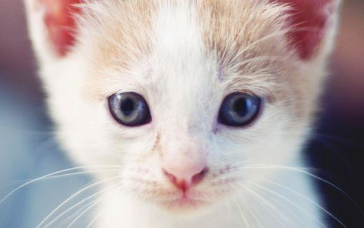 Обои Мордашка котенка на размытом фоне