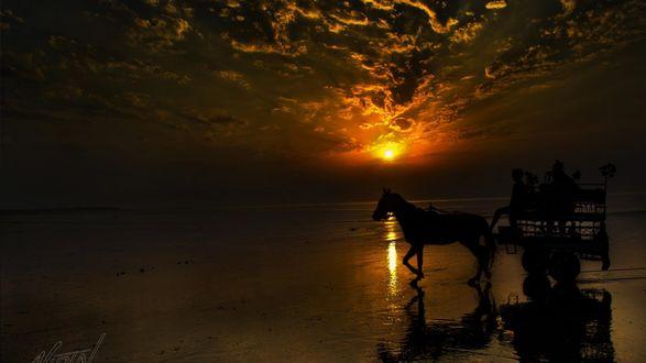 Обои Лошадь с повозкой на закате, на фоне спокойного моря