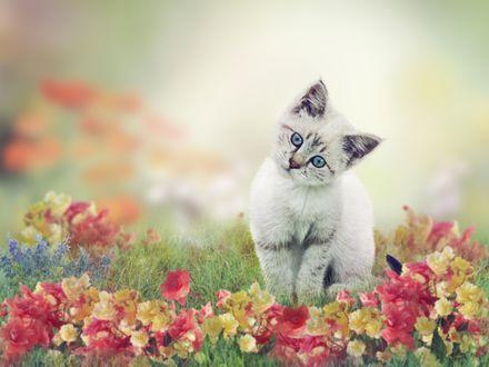 Обои Котенок сидит на траве с цветами
