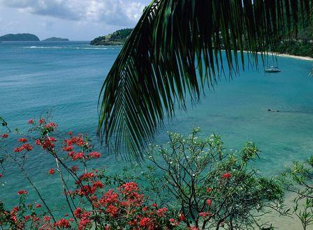Обои Тропическое морское побережье, вид сверху