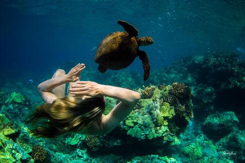 Обои Девушка и рядом черепаха под водой, фотограф Sarah Lee