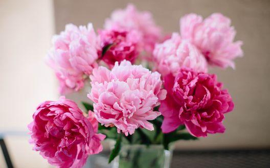 Обои Букет розовых пионов