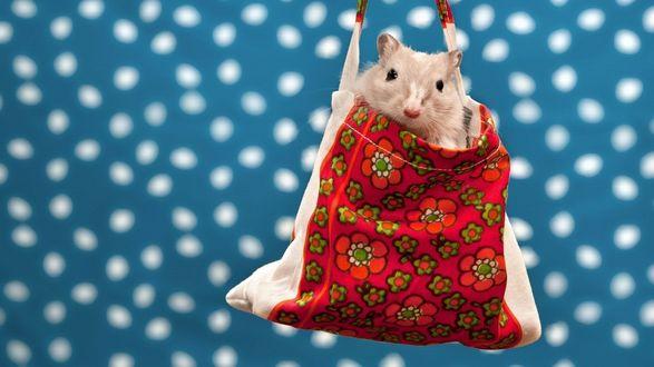 Обои Серый мышонок сидит в мешочке на пятнистом фоне