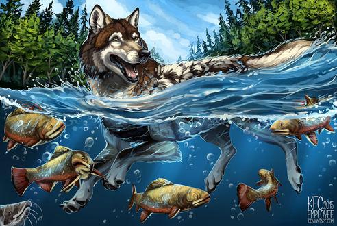 Обои Волк в воде с рыбами, by KFCemployee