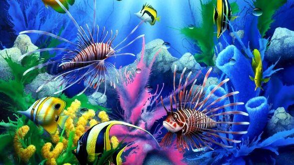 Обои Яркие и разноцветные обитатели морских глубин